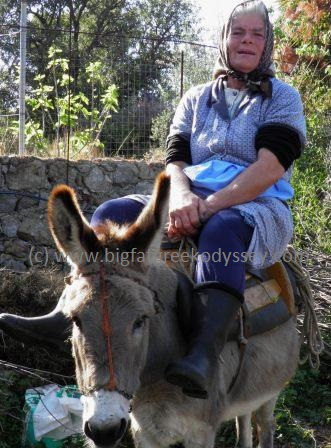 fgoteini on donkey
