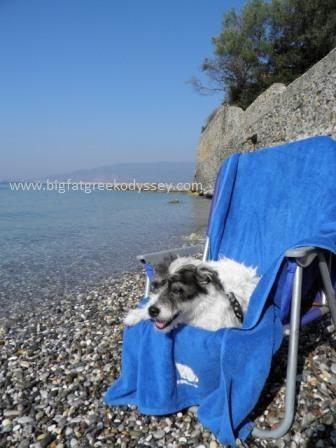 Wally on sunbed caption